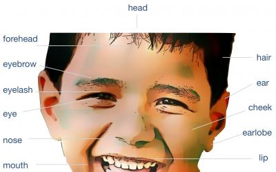 Recognize and name head parts with picture